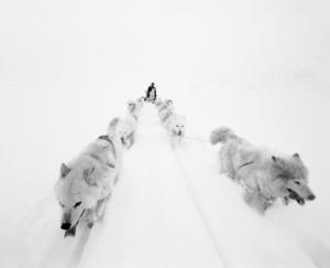 Paolo Solari Bozzi© - Sermilik Fjord, Groenlandia 2016